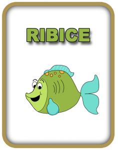 ribice
